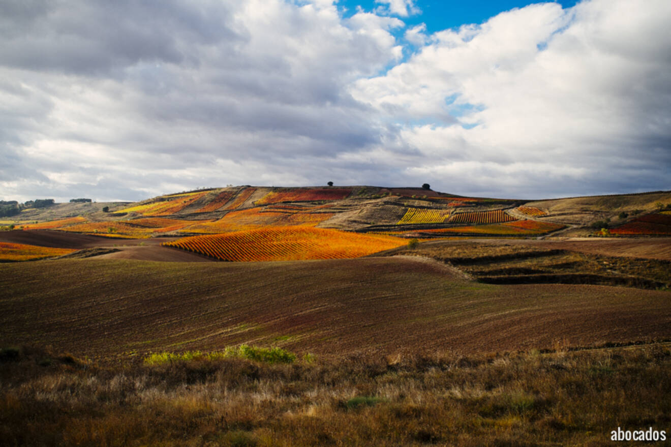 Viñedos La Rioja 13-11