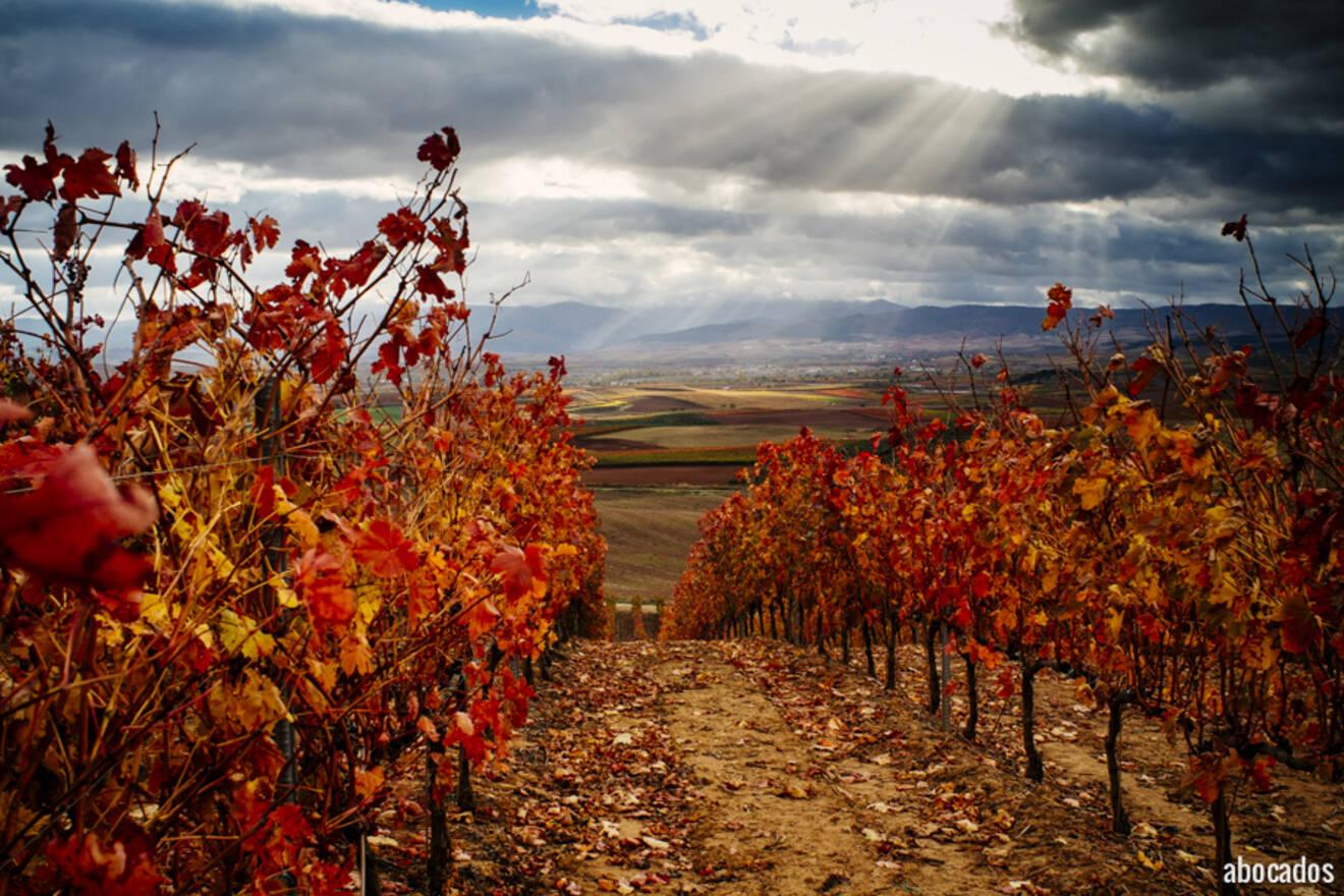 Viñedos La Rioja 13-32