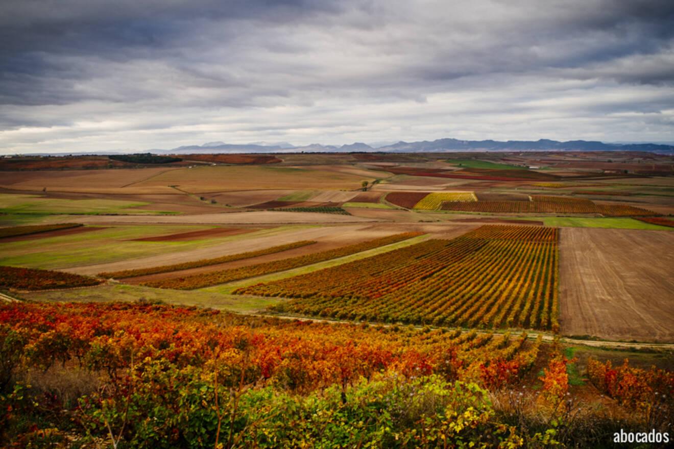 Viñedos La Rioja 13-34