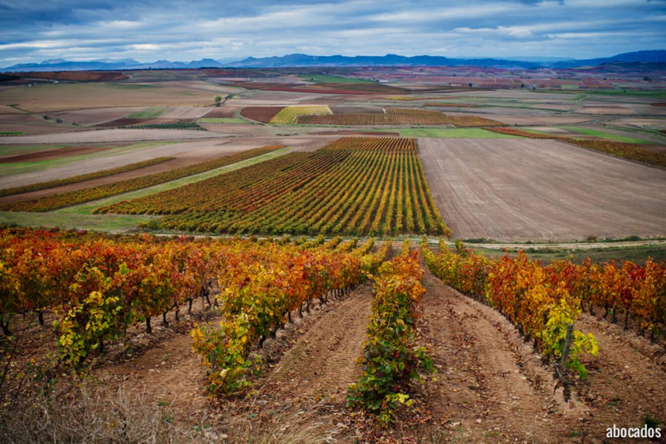 Viñedos La Rioja 13-35