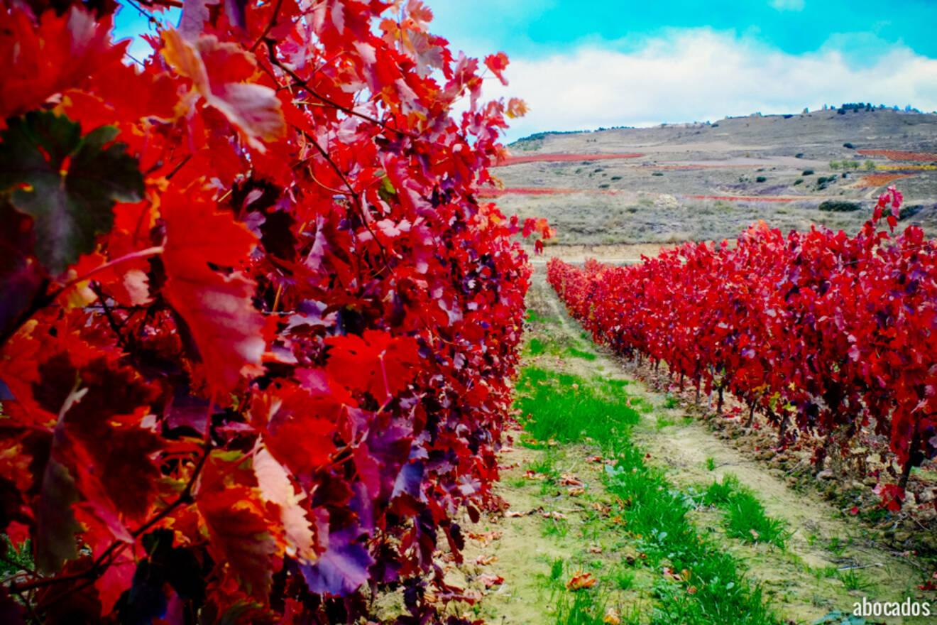 Viñedos La Rioja 13-56