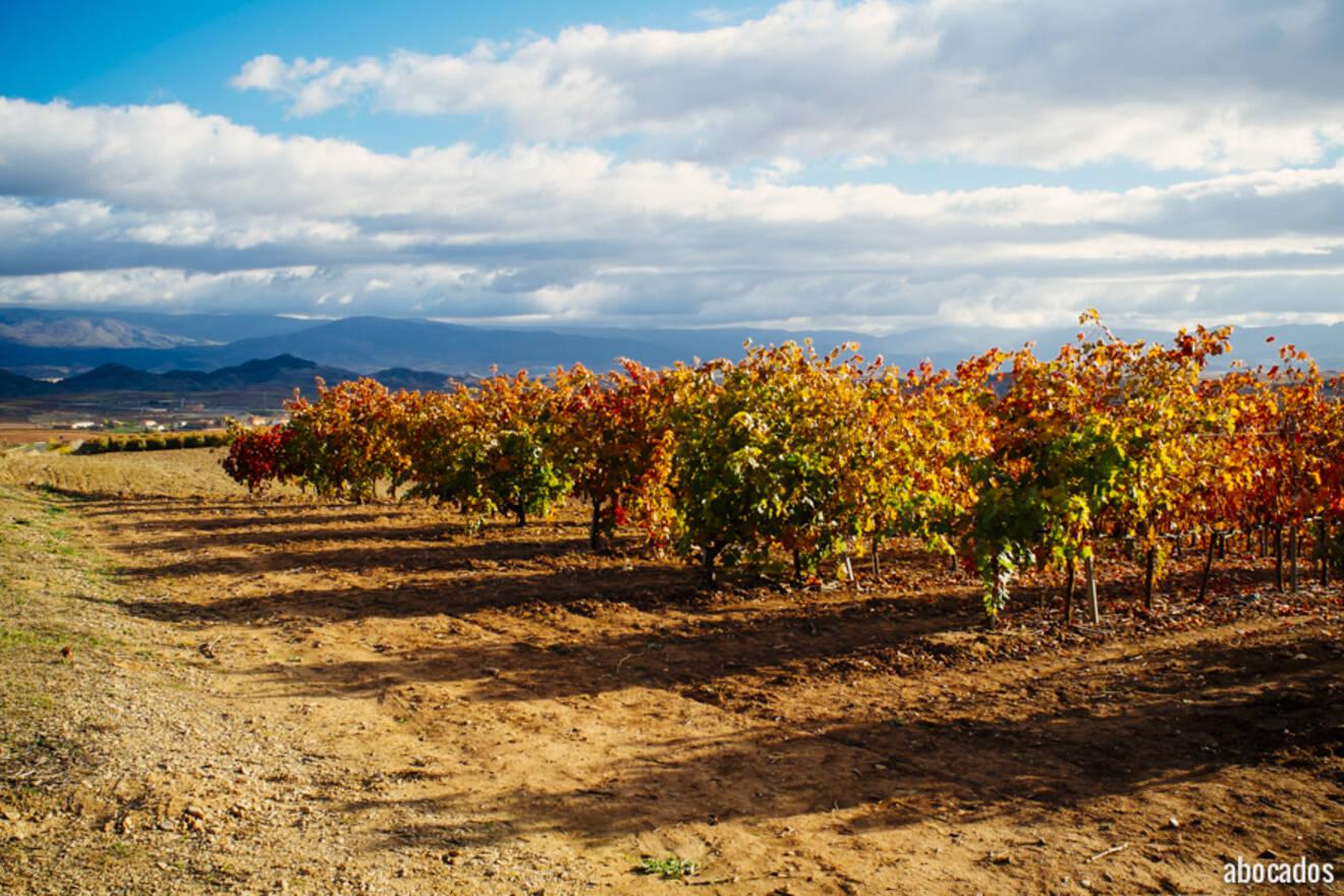 Viñedos La Rioja 13-6