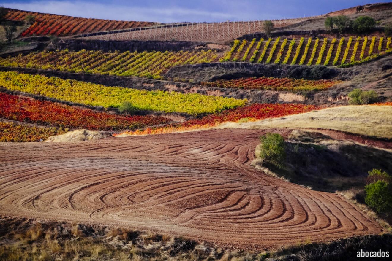 Viñedos La Rioja 13-63