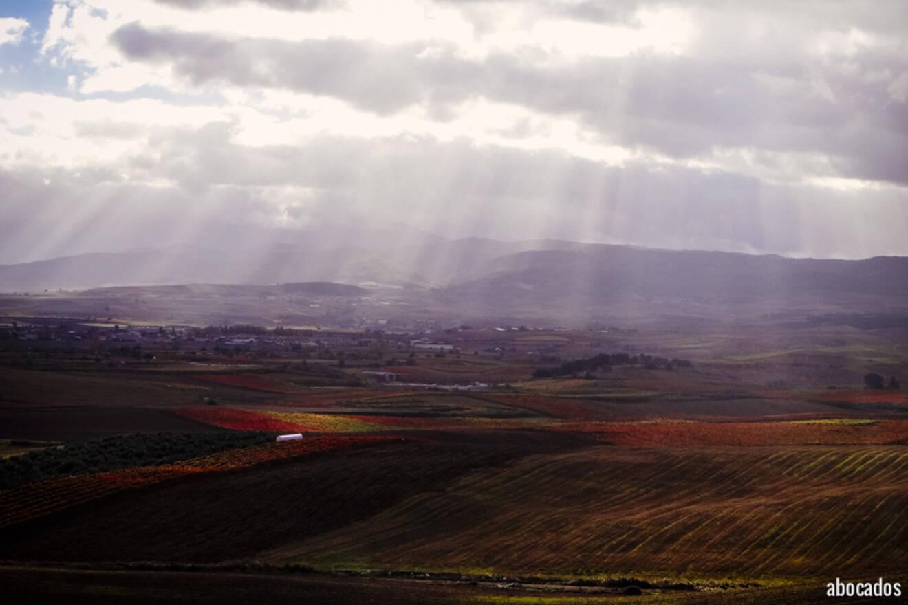 Viñedos La Rioja 13-69