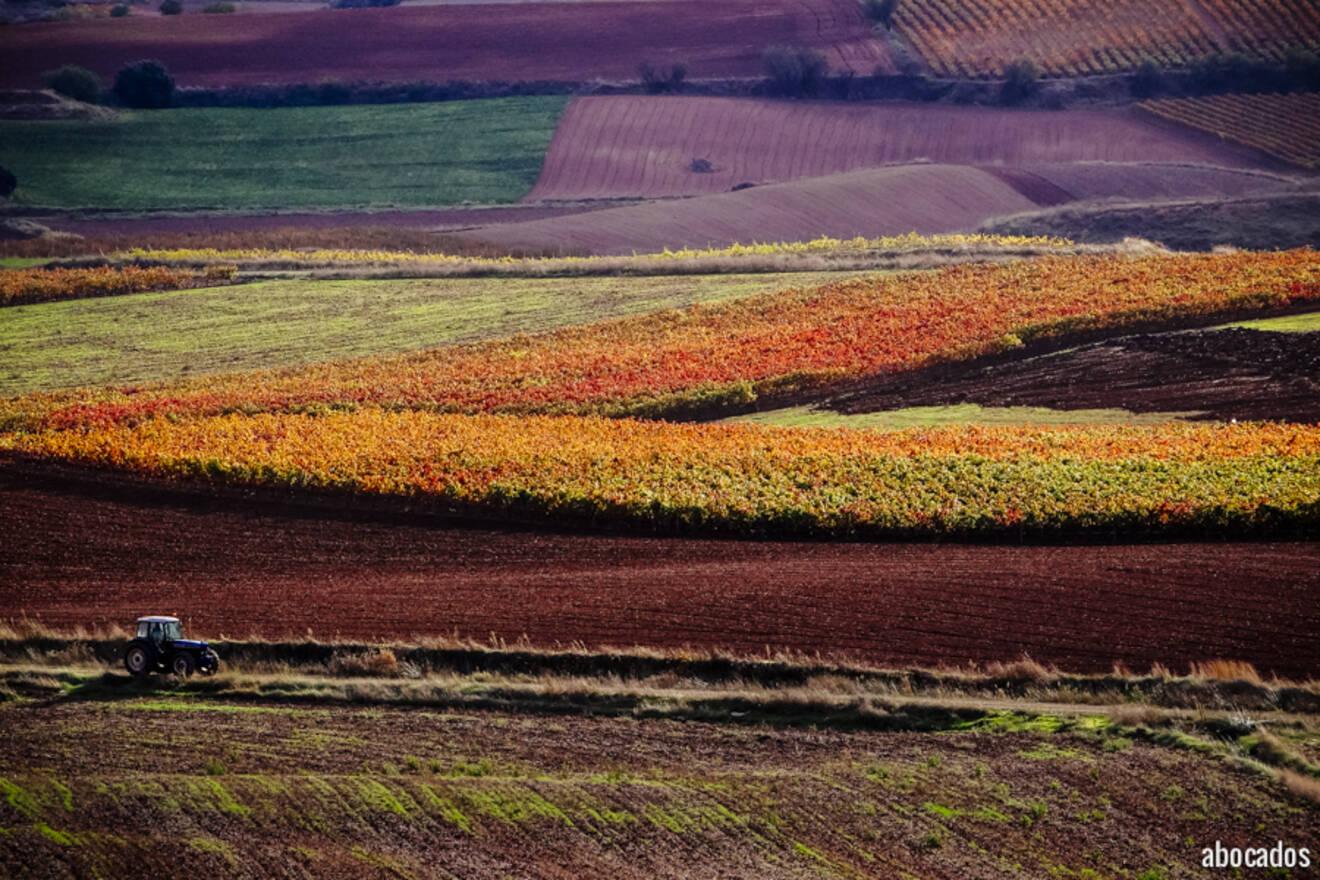 Viñedos La Rioja 13-71