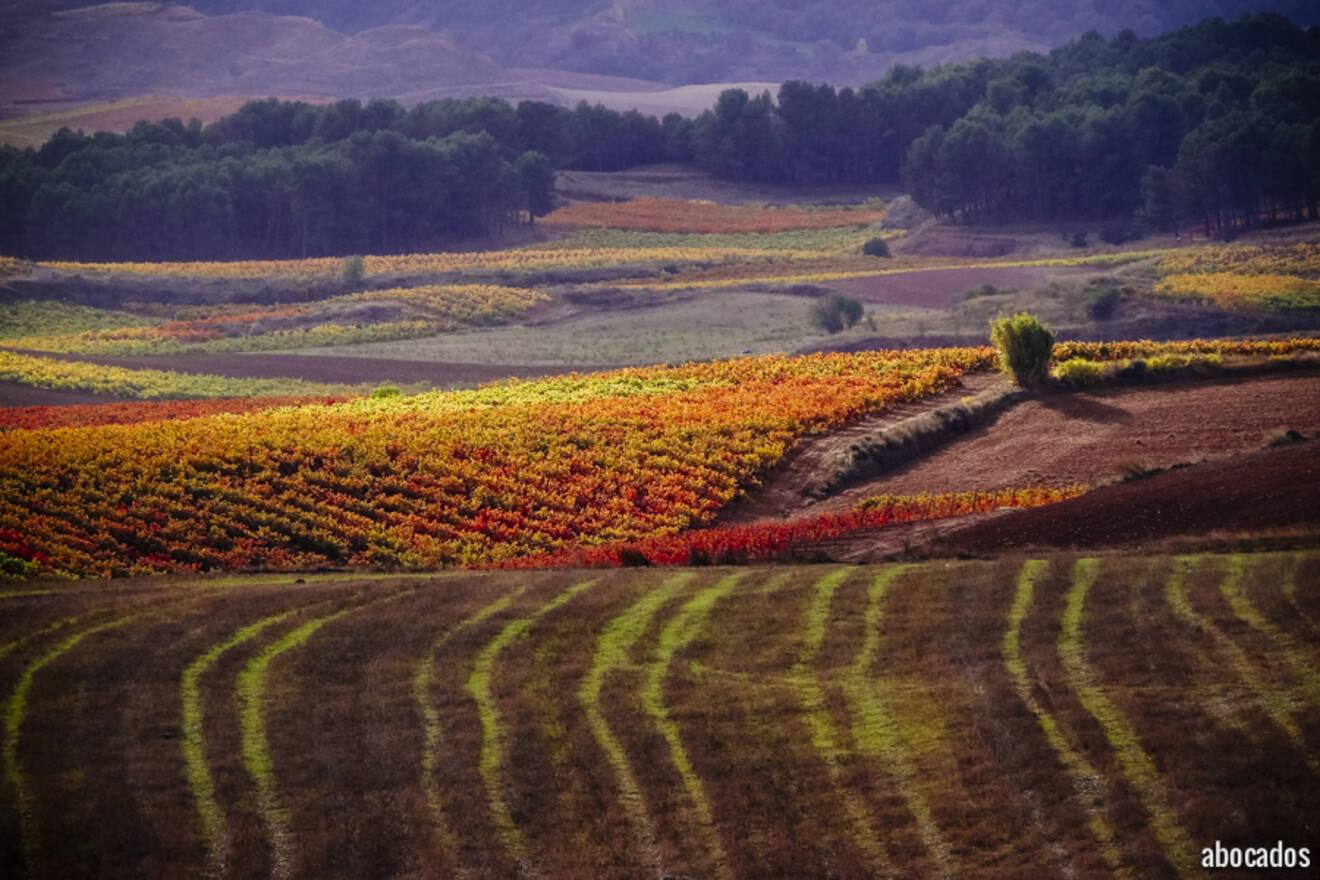 Viñedos La Rioja 13-72