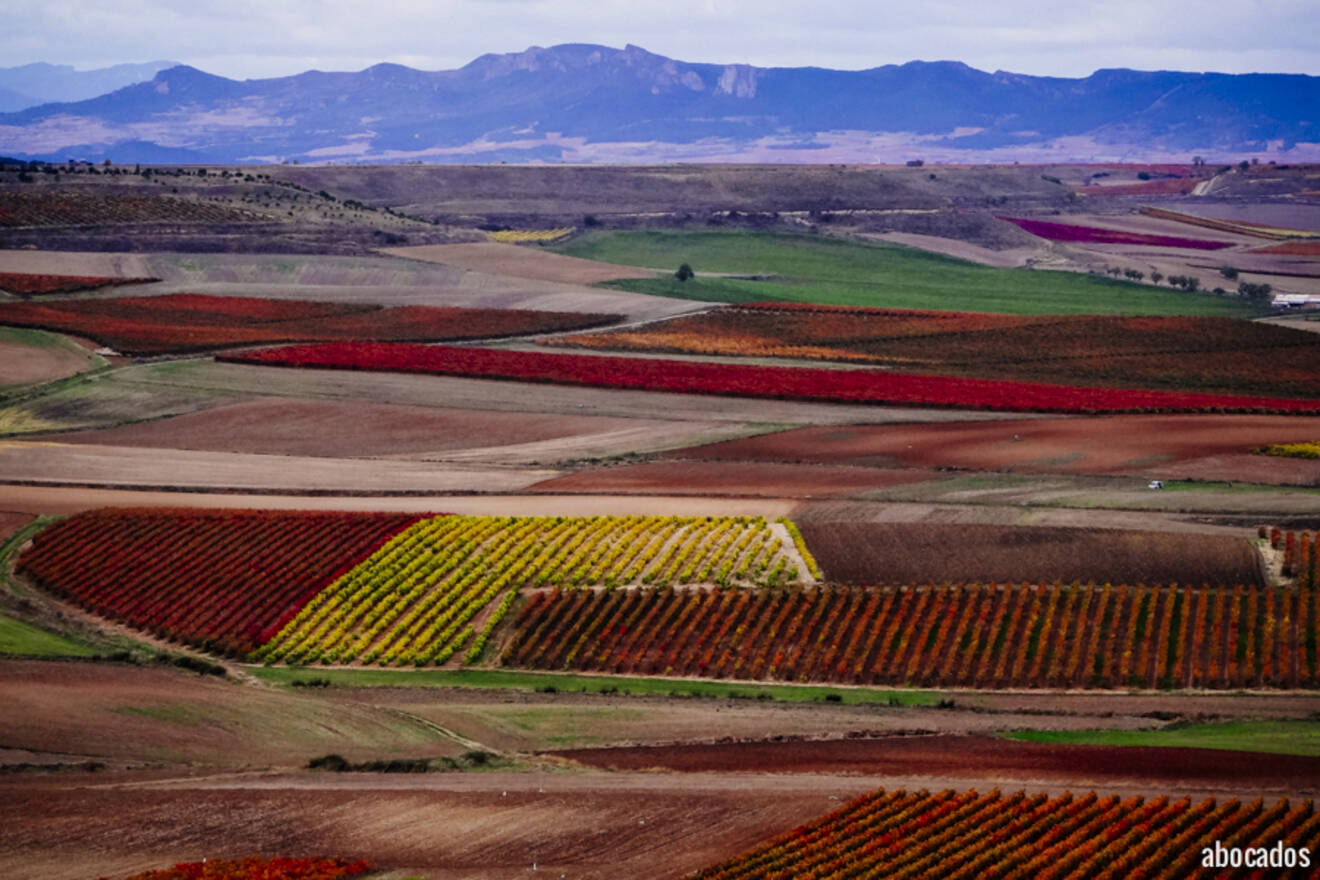 Viñedos La Rioja 13-77
