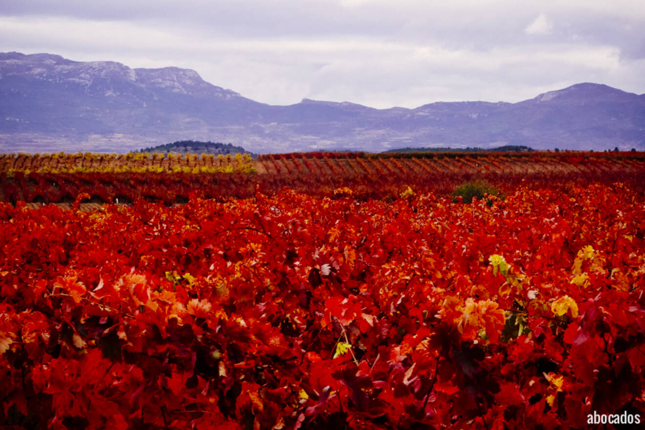 Viñedos La Rioja 13-88