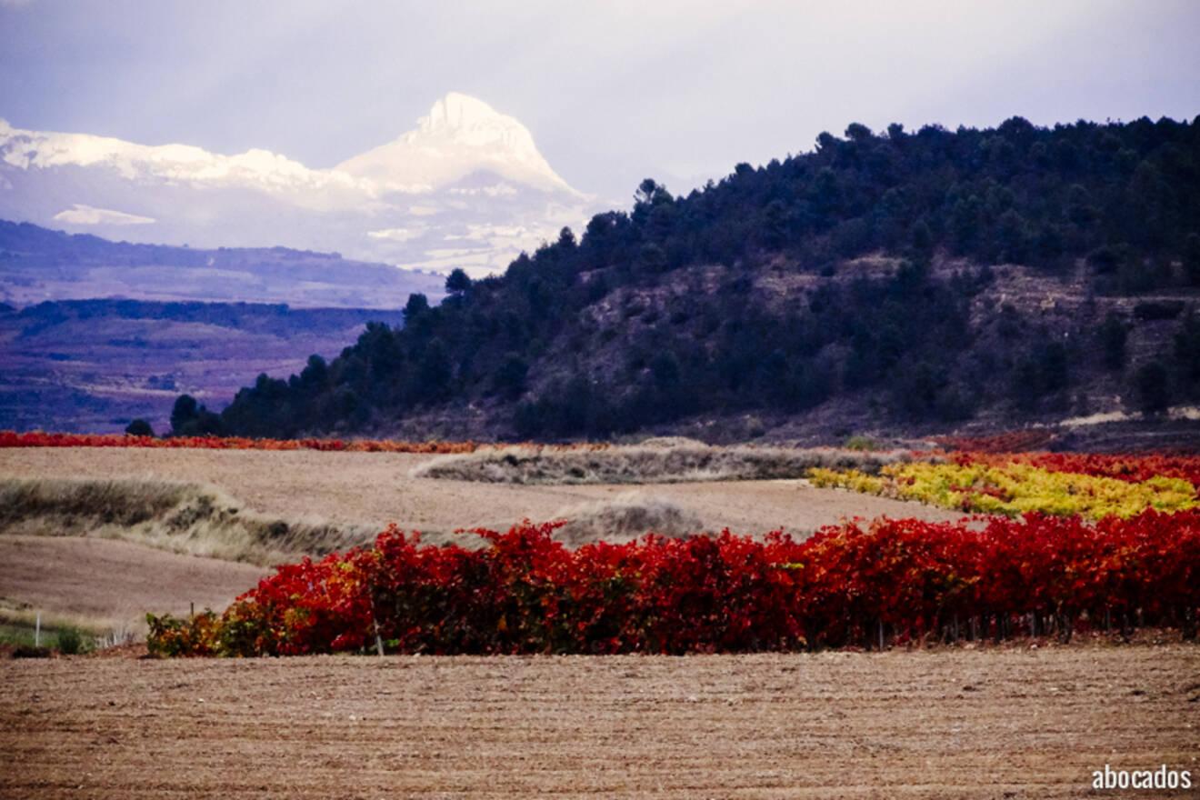 Viñedos La Rioja 13-99