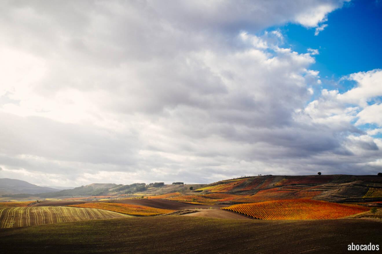Viñedos La Rioja 13-14