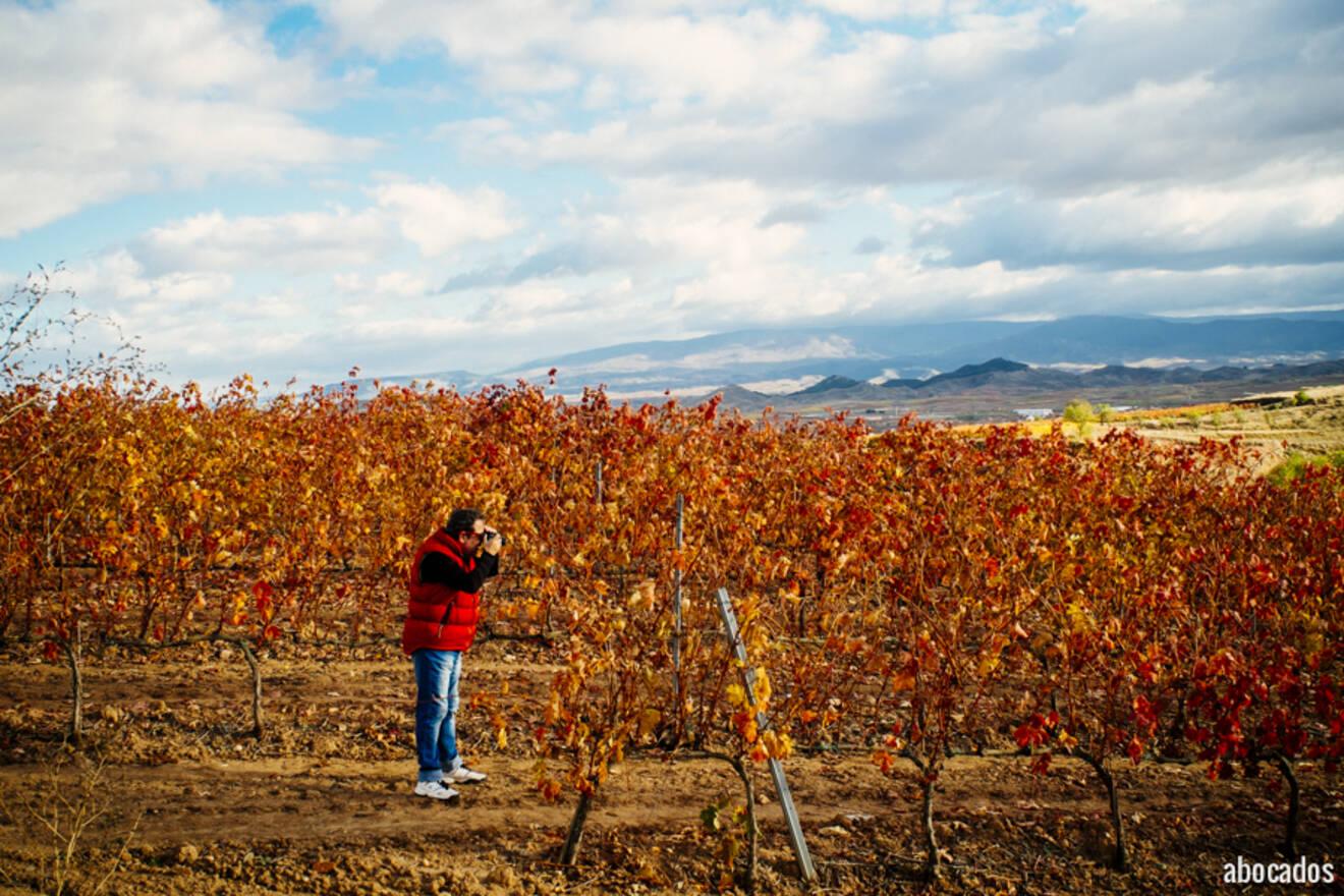 Viñedos La Rioja 13-21