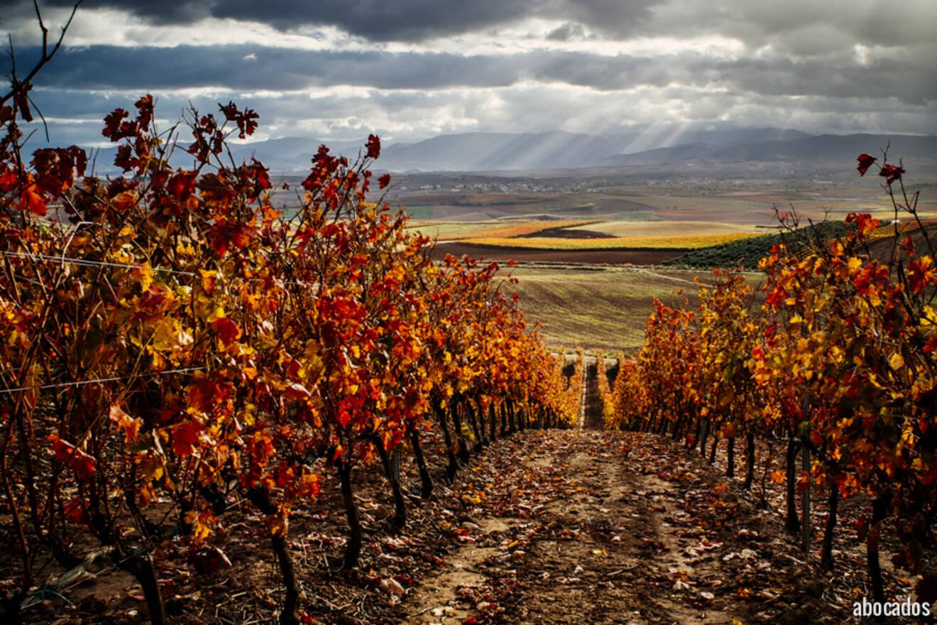 Viñedos La Rioja 13-24