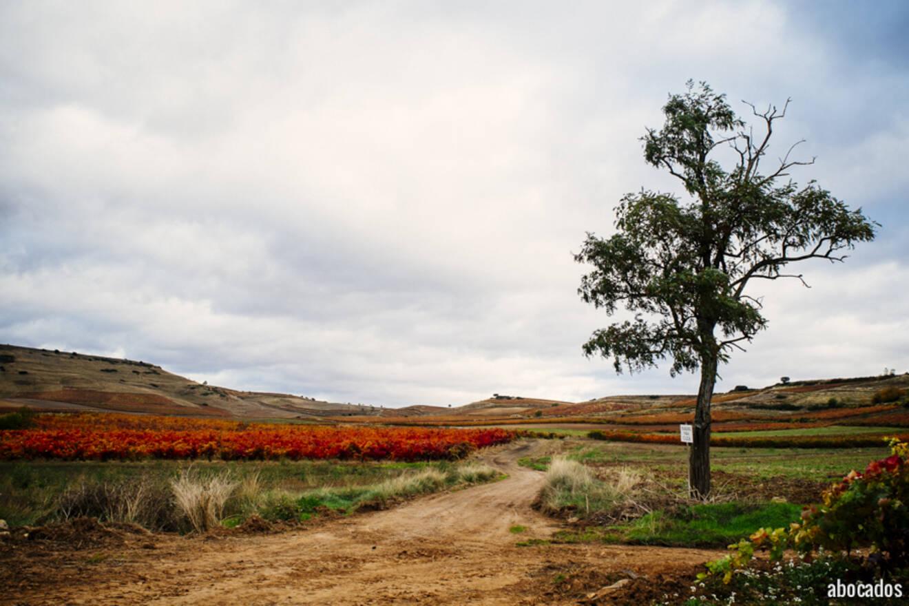 Viñedos La Rioja 13-38