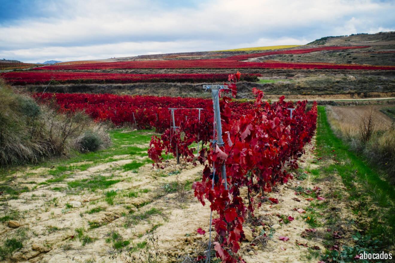 Viñedos La Rioja 13-51