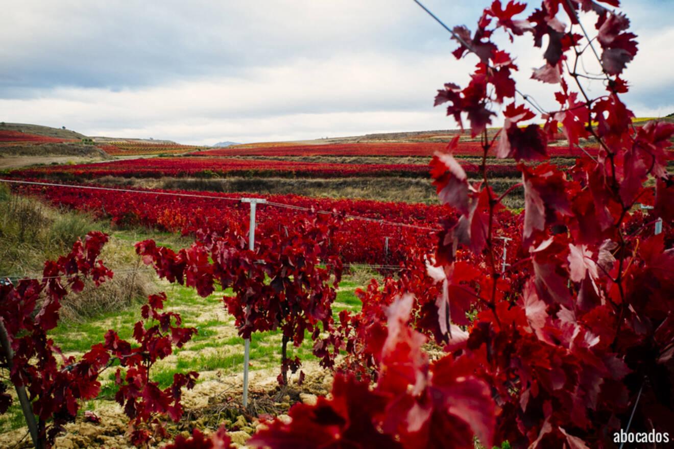 Viñedos La Rioja 13-53