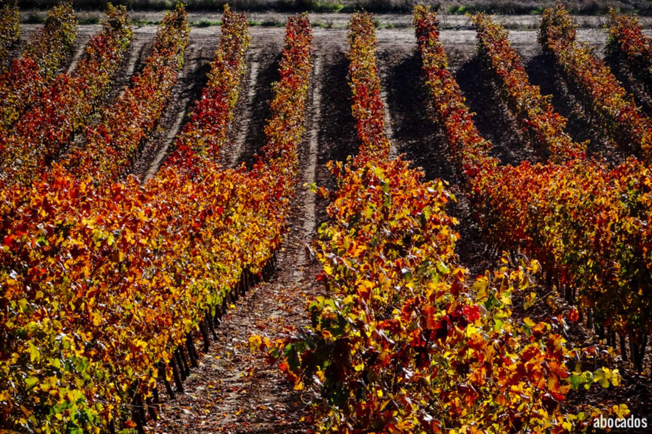 Viñedos La Rioja 13-60
