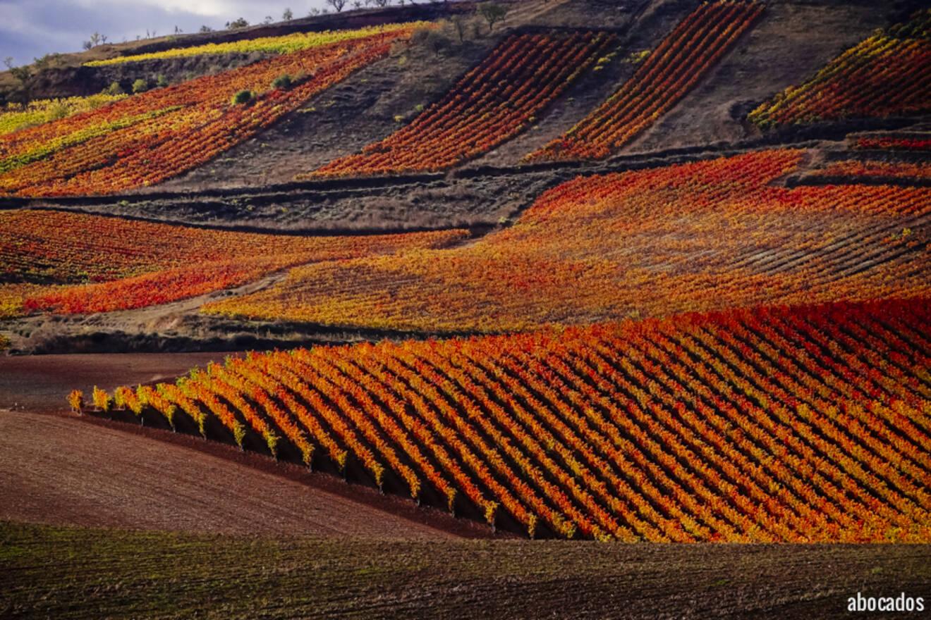 Viñedos La Rioja 13-62