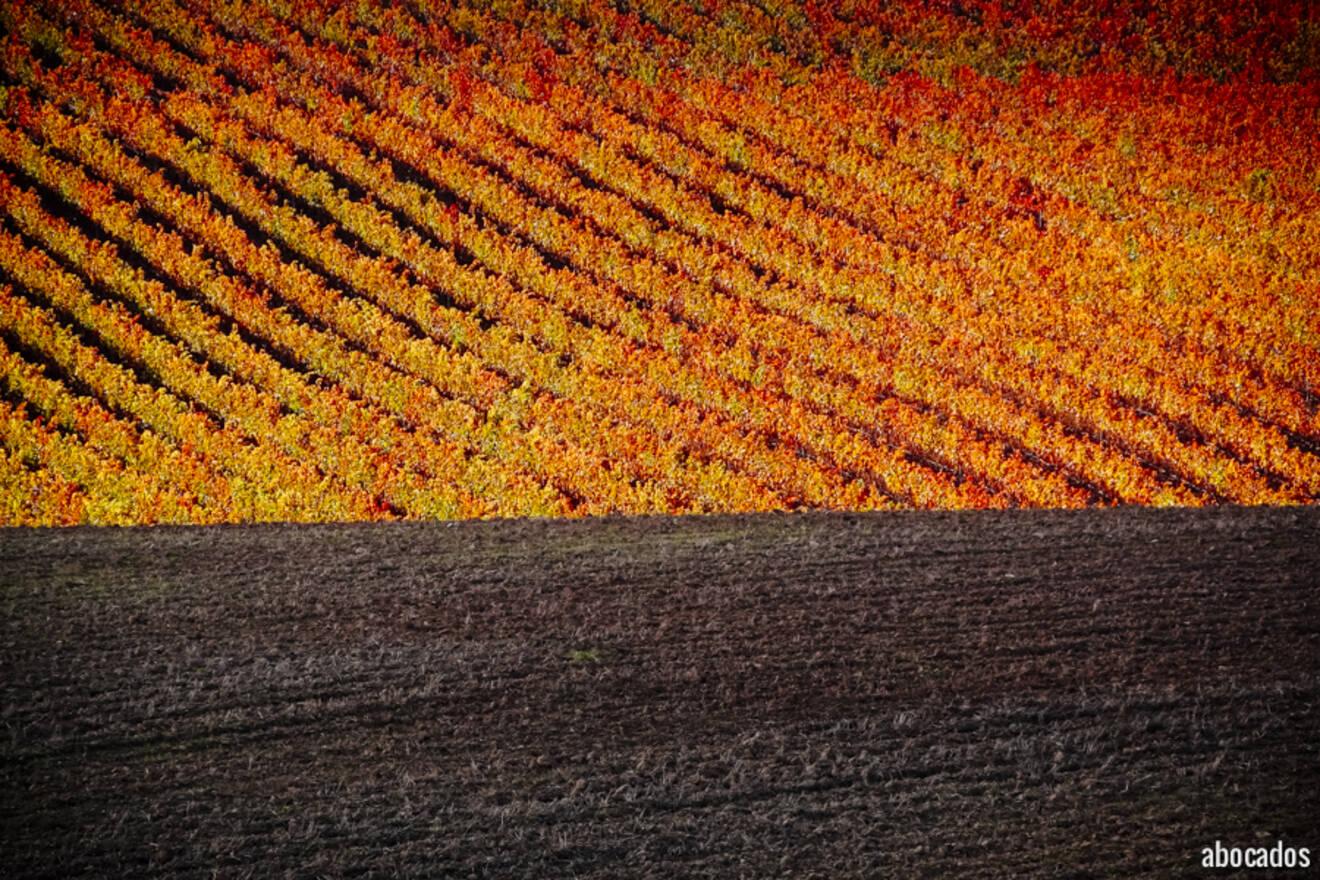 Viñedos La Rioja 13-66