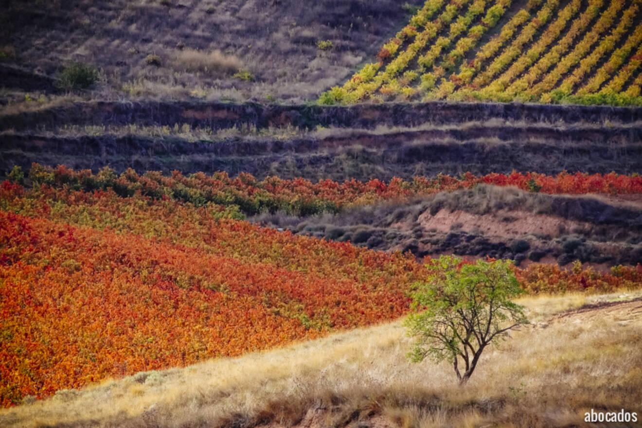 Viñedos La Rioja 13-67