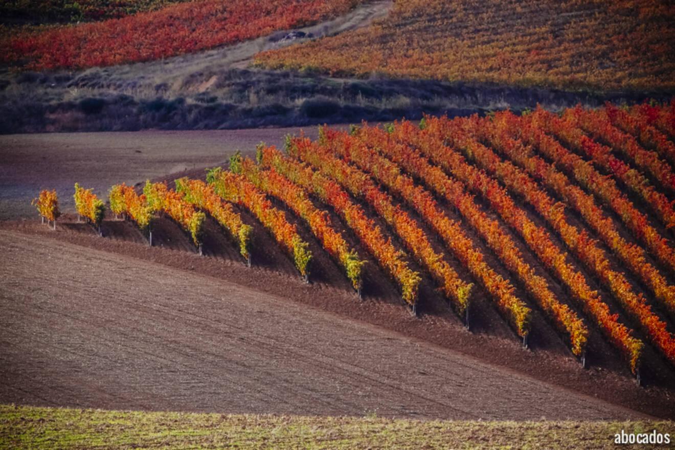 Viñedos La Rioja 13-68