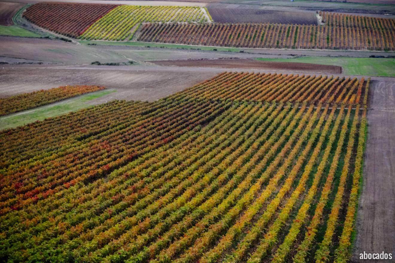 Viñedos La Rioja 13-76