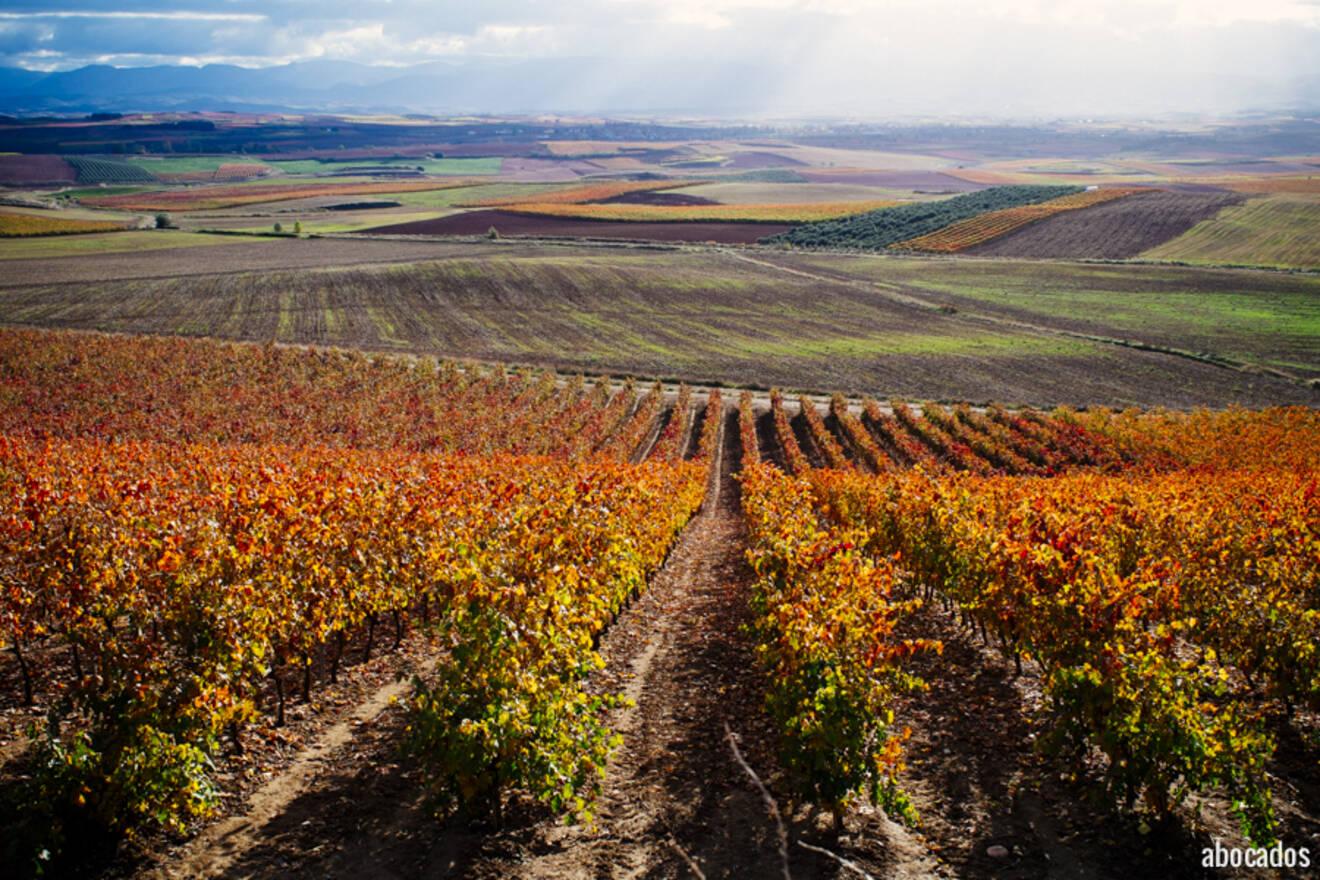Viñedos La Rioja 13-8