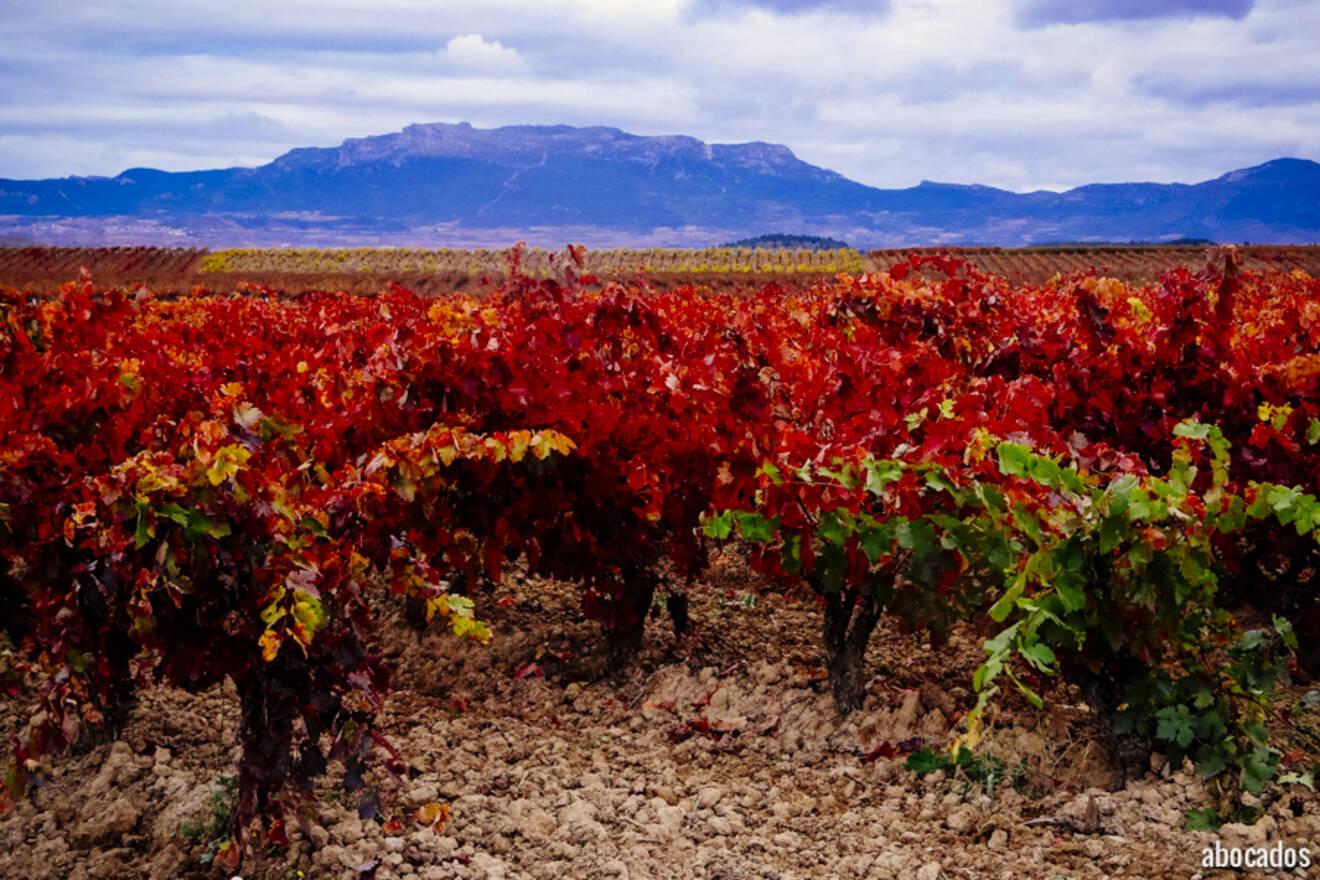 Viñedos La Rioja 13-86